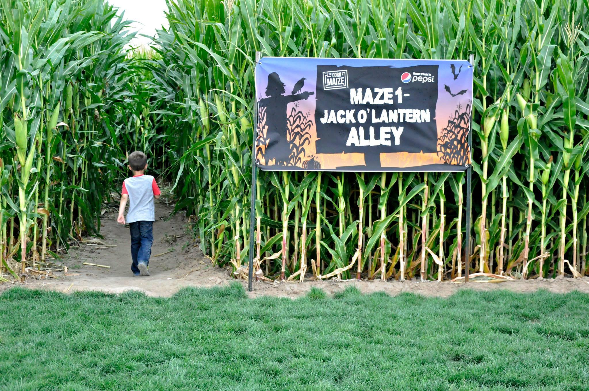 the maize case study